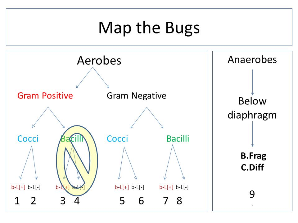 Aerobes Gram Positive Gram Negative Cocci Bacilli b-L[+] b-L[-] b-L[+] b-L[-] b-L[+] b-L[-] b-L[+] b-L[-] 1 2 3 4 5 6 7 8 Map the Bugs Anaerobes Below diaphragm B.Frag C.Diff 9.
