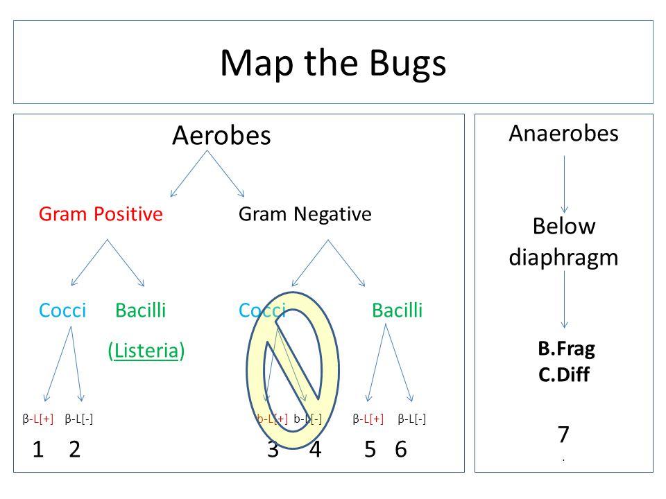 Aerobes Gram Positive Gram Negative Cocci Bacilli (Listeria) β-L[+] β-L[-] b-L[+] b-L[-] β-L[+] β-L[-] 1 2 3 4 5 6 Map the Bugs Anaerobes Below diaphragm B.Frag C.Diff 7.