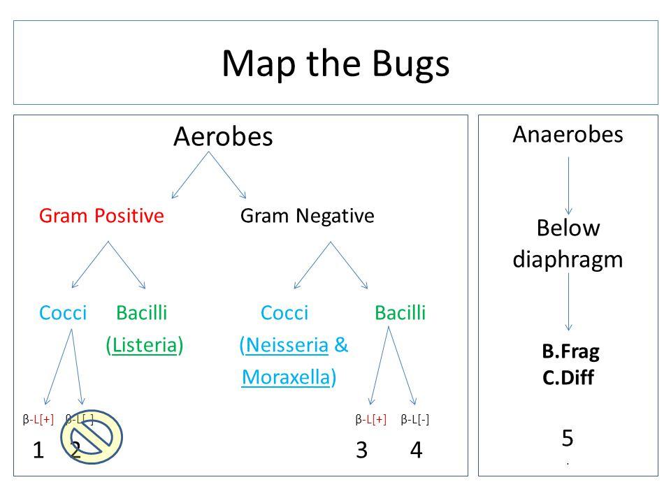 Aerobes Gram Positive Gram Negative Cocci Bacilli (Listeria) (Neisseria & Moraxella) β-L[+] β-L[-] β-L[+] β-L[-] 1 2 3 4 Map the Bugs Anaerobes Below diaphragm B.Frag C.Diff 5.