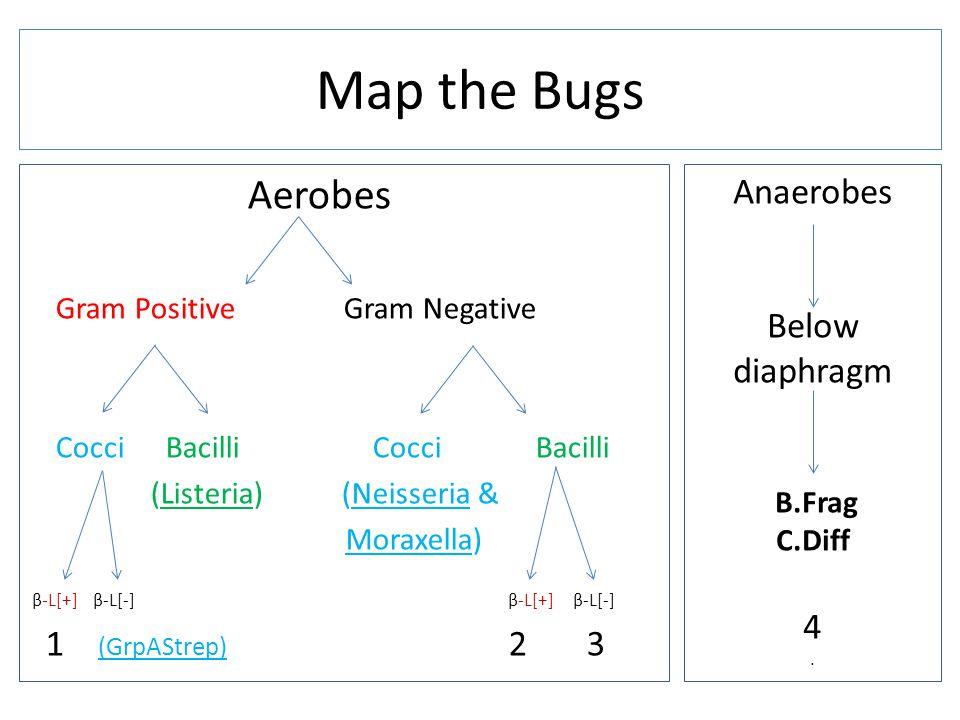 Aerobes Gram Positive Gram Negative Cocci Bacilli (Listeria) (Neisseria & Moraxella) β-L[+] β-L[-] β-L[+] β-L[-] 1 (GrpAStrep) 2 3 Map the Bugs Anaerobes Below diaphragm B.Frag C.Diff 4.