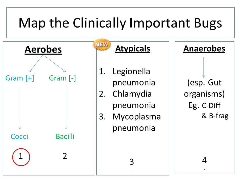Aerobes Gram [+] Gram [-] Cocci Bacilli 1 2 Map the Clinically Important Bugs Anaerobes (esp. Gut organisms) Eg. C-Diff & B-frag 4. Atypicals 1.Legion