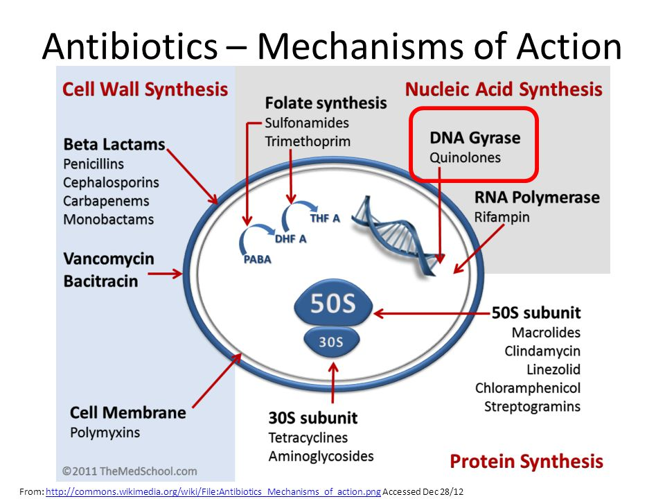 Antibiotics – Mechanisms of Action From: http://commons.wikimedia.org/wiki/File:Antibiotics_Mechanisms_of_action.png Accessed Dec 28/12http://commons.wikimedia.org/wiki/File:Antibiotics_Mechanisms_of_action.png