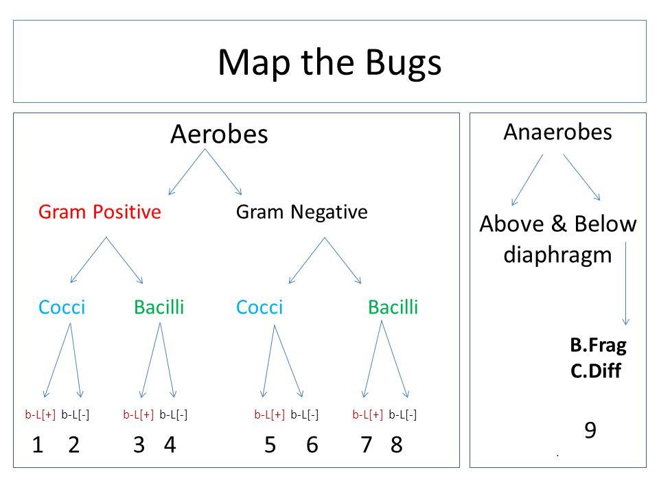 Aerobes Gram Positive Gram Negative Cocci Bacilli b-L[+] b-L[-] b-L[+] b-L[-] b-L[+] b-L[-] b-L[+] b-L[-] 1 2 3 4 5 6 7 8 Map the Bugs Anaerobes Above