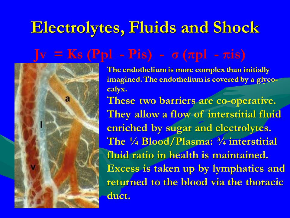 Electrolytes, Fluids and Shock Jv = Ks (Ppl - Pis) - σ (πpl - πis) The endothelium is more complex than initially imagined. The endothelium is covered