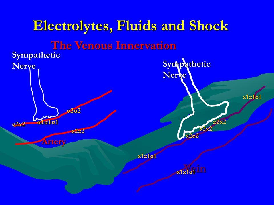 Electrolytes, Fluids and Shock The Venous Innervation Artery Sympathetic Nerve α1α1α1α1α1α1α1α1α1α1α1α1 α2α2α2α2α2α2α2α2 α2α2α2α2α2α2α2α2 α2α2α2α2α2α2