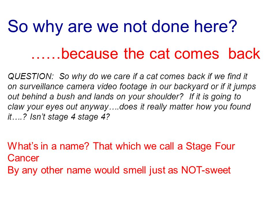 So why are we not done here? ……because the cat comes back QUESTION: So why do we care if a cat comes back if we find it on surveillance camera video f