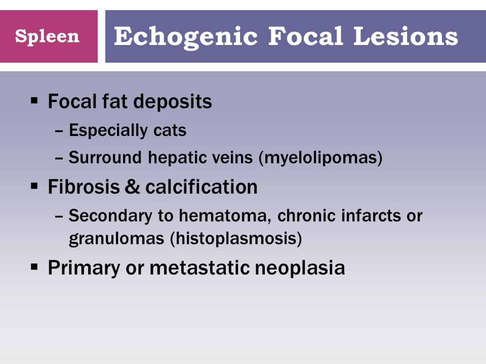 Spleen Echogenic Focal Lesions  Focal fat deposits –Especially cats –Surround hepatic veins (myelolipomas)  Fibrosis & calcification –Secondary to h