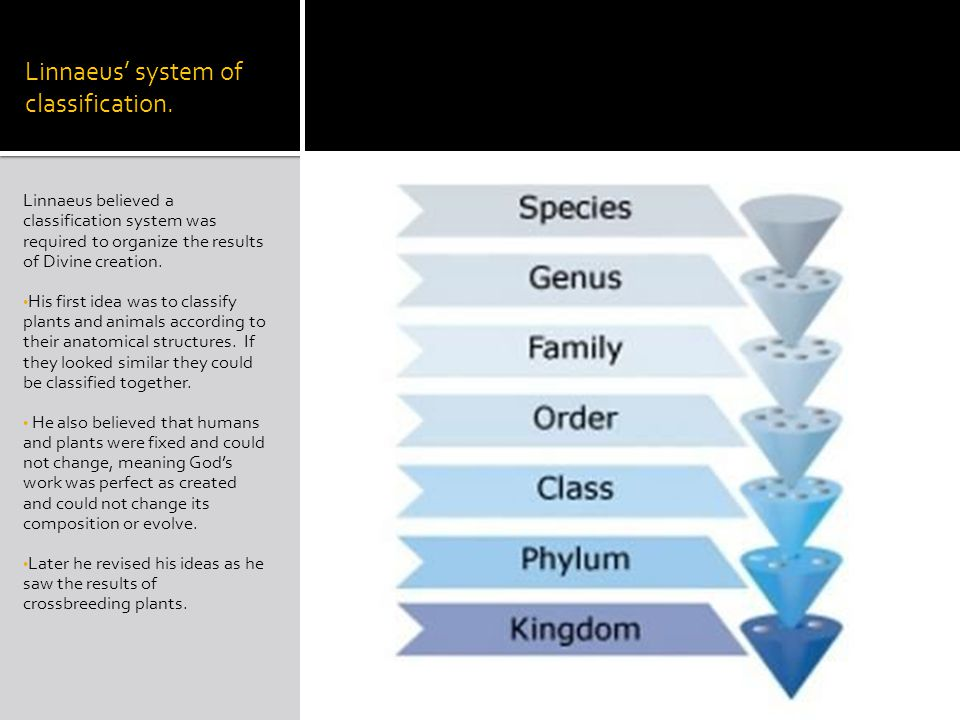 Linnaeus' system of classification.