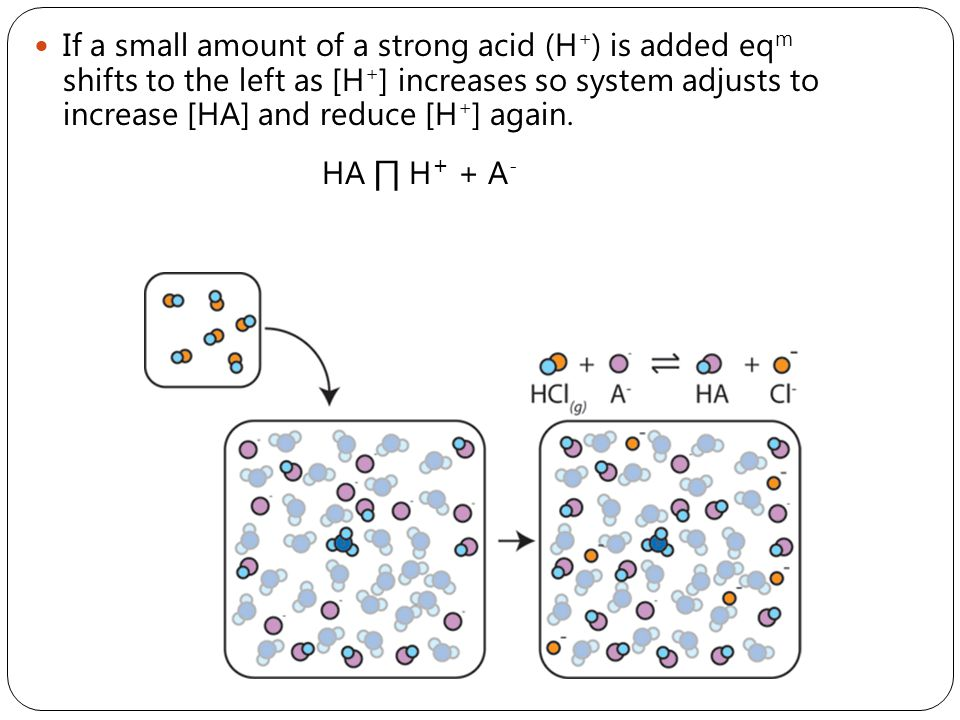A small amount of a strong base will react with H + to form H 2 O and eq m will shift to the right to increase [H + ] again.