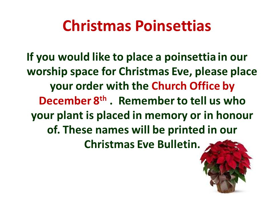 Christmas Poinsettias If you would like to place a poinsettia in our worship space for Christmas Eve, please place your order with the Church Office by December 8 th.