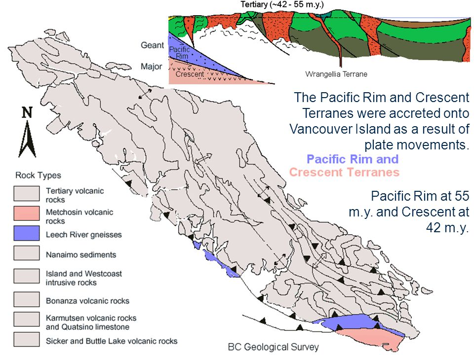 The Pacific Rim and Crescent Terranes were accreted onto Vancouver Island as a result of plate movements. Pacific Rim at 55 m.y. and Crescent at 42 m.