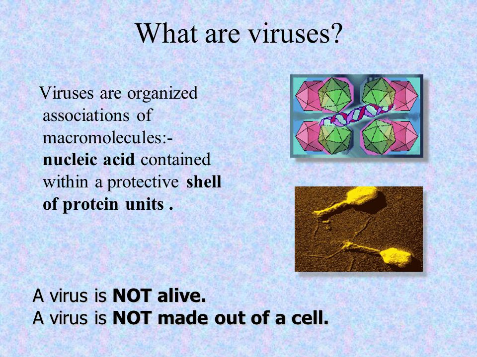 What are viruses? Viruses are organized associations of macromolecules:- nucleic acid contained within a protective shell of protein units. A virus is