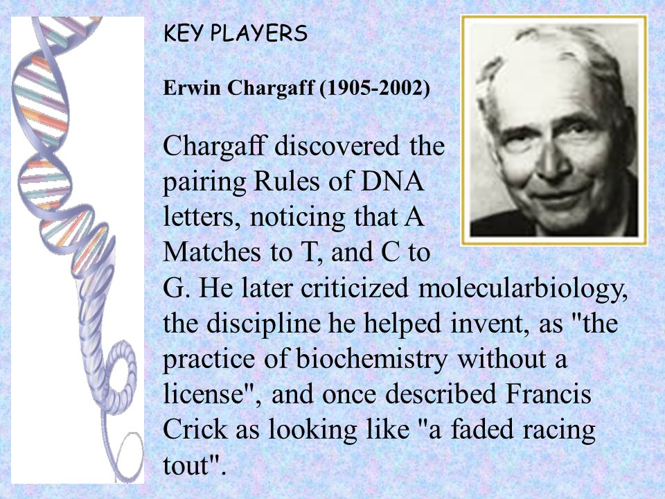 KEY PLAYERS Erwin Chargaff (1905-2002) Chargaff discovered the pairing Rules of DNA letters, noticing that A Matches to T, and C to G. He later critic