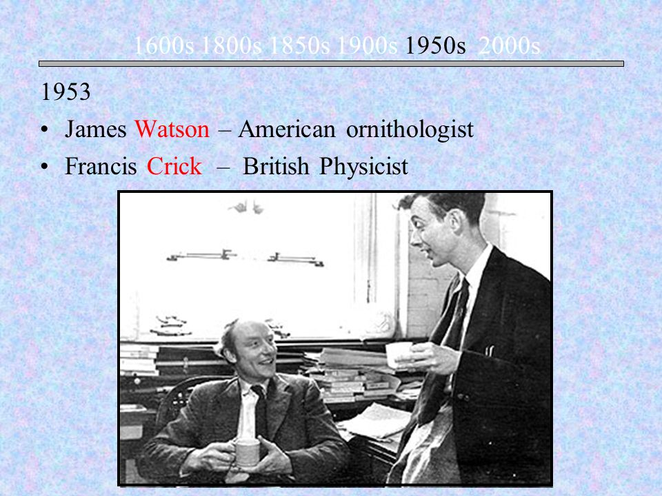 1953 James Watson – American ornithologist Francis Crick – British Physicist 1600s 1800s 1850s 1900s 1950s 2000s
