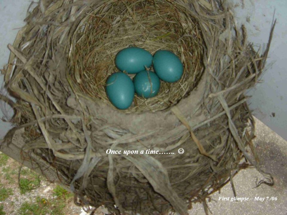 Well as of lunchtime today there is just one robin left in the nest.