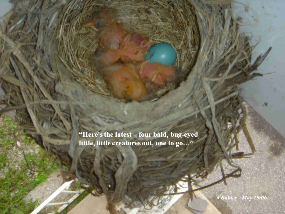 Here s the latest – four bald, bug-eyed little, little creatures out, one to go… 4 Babies – May 19/06