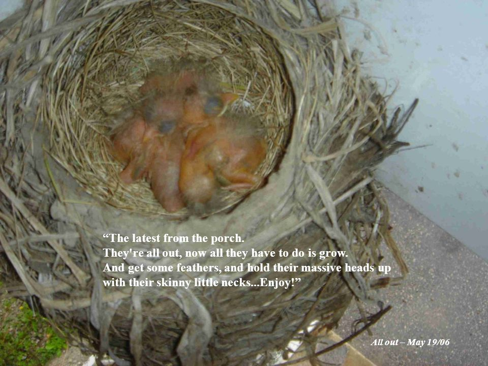 They re very good at their jobs right now – eating and growing, making feathers, and maybe thinking about flying.