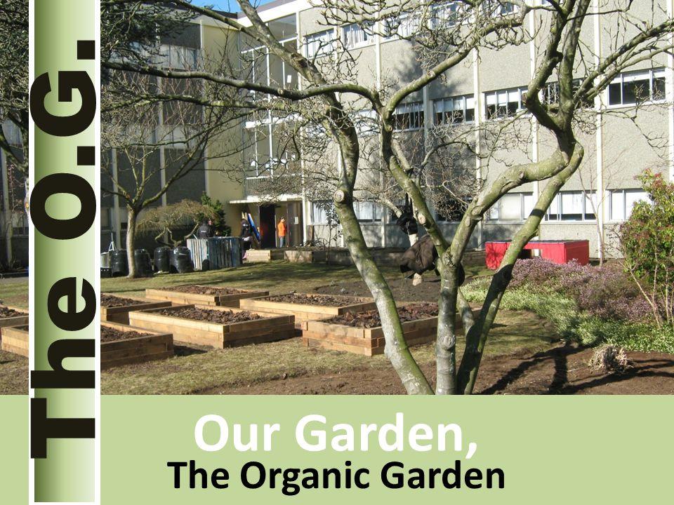 The Organic Garden The O.G. Our Garden,