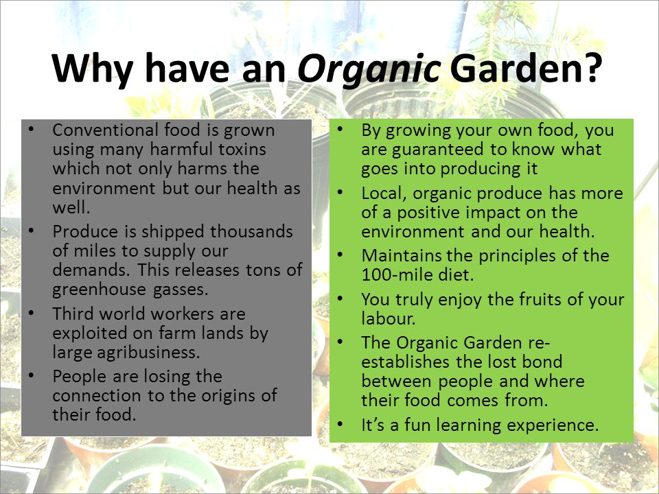 Why have an Organic Garden.