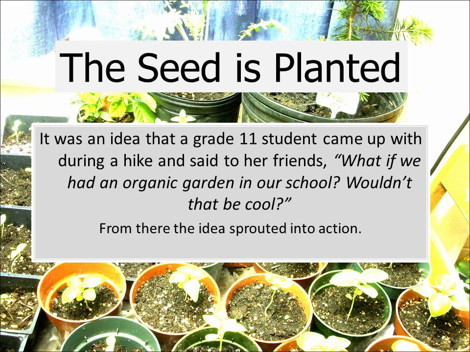 It was an idea that a grade 11 student came up with during a hike and said to her friends, What if we had an organic garden in our school.