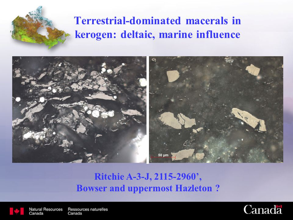 Terrestrial-dominated macerals in kerogen: deltaic, marine influence Ritchie A-3-J, 2115-2960', Bowser and uppermost Hazleton