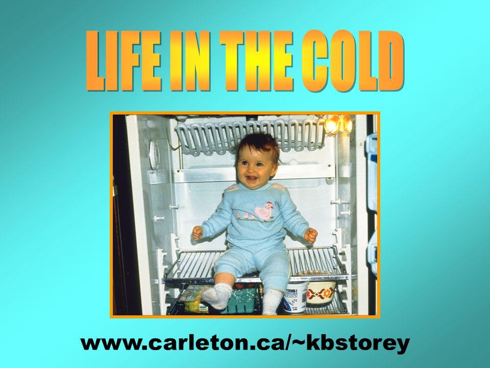 www.carleton.ca/~kbstorey