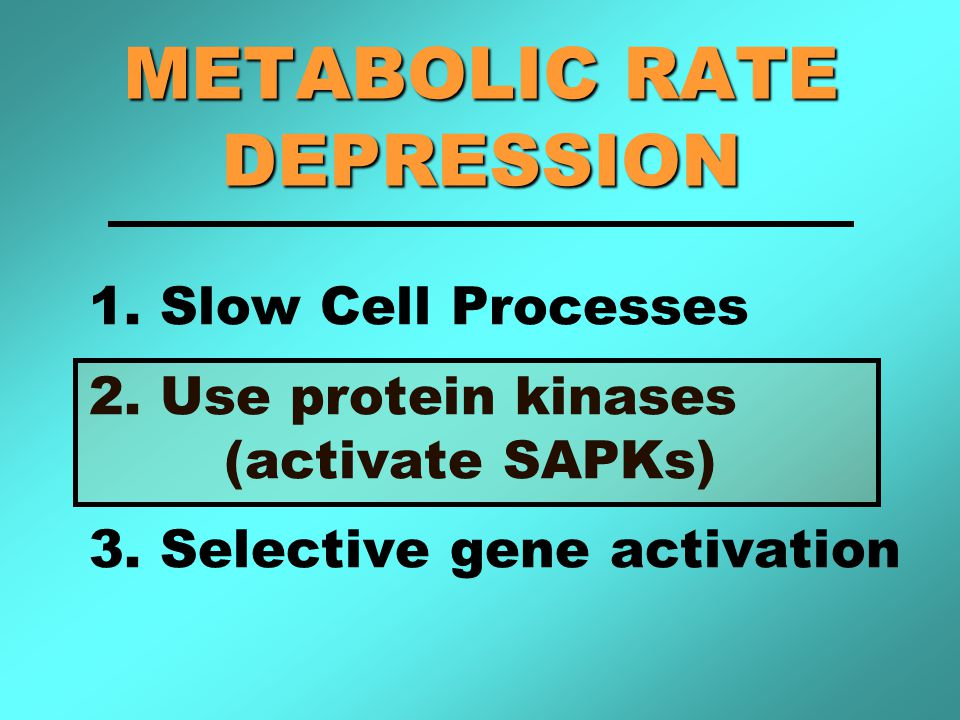 METABOLIC RATE DEPRESSION 1. Slow Cell Processes 2.
