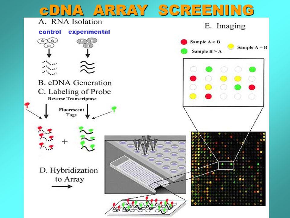 cDNA ARRAY SCREENING control experimental