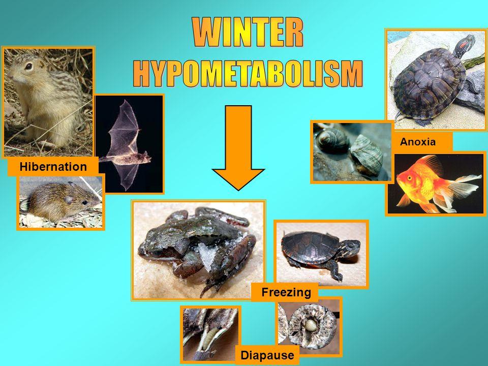 Diapause Freezing Anoxia Hibernation