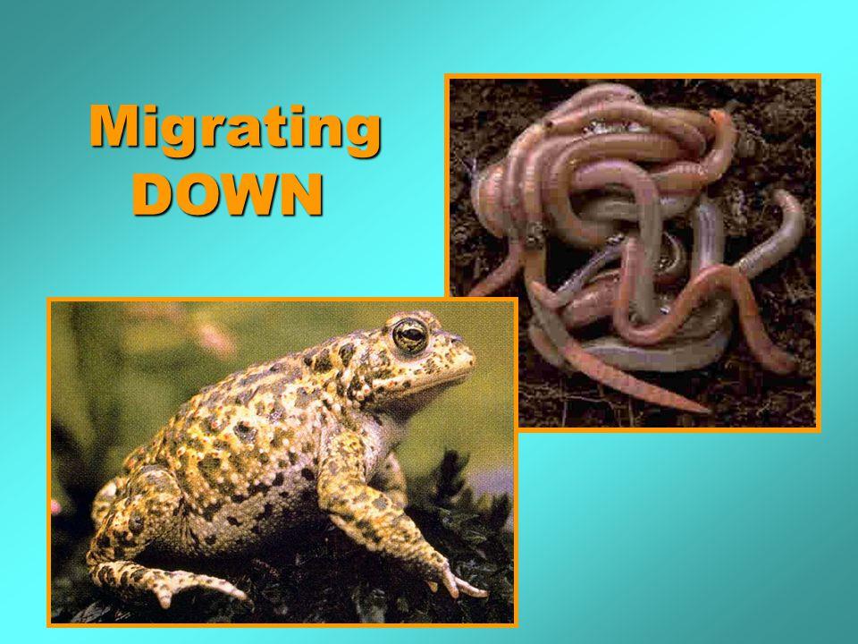 MigratingDOWN