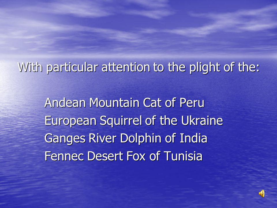 The Andean Cat is about twice the size of a domestic cat and is one of the most beautiful of all wild cats.