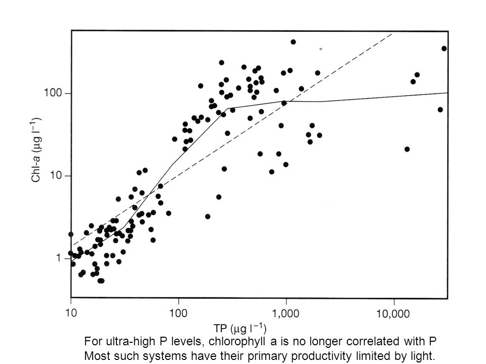 For ultra-high P levels, chlorophyll a is no longer correlated with P Most such systems have their primary productivity limited by light.