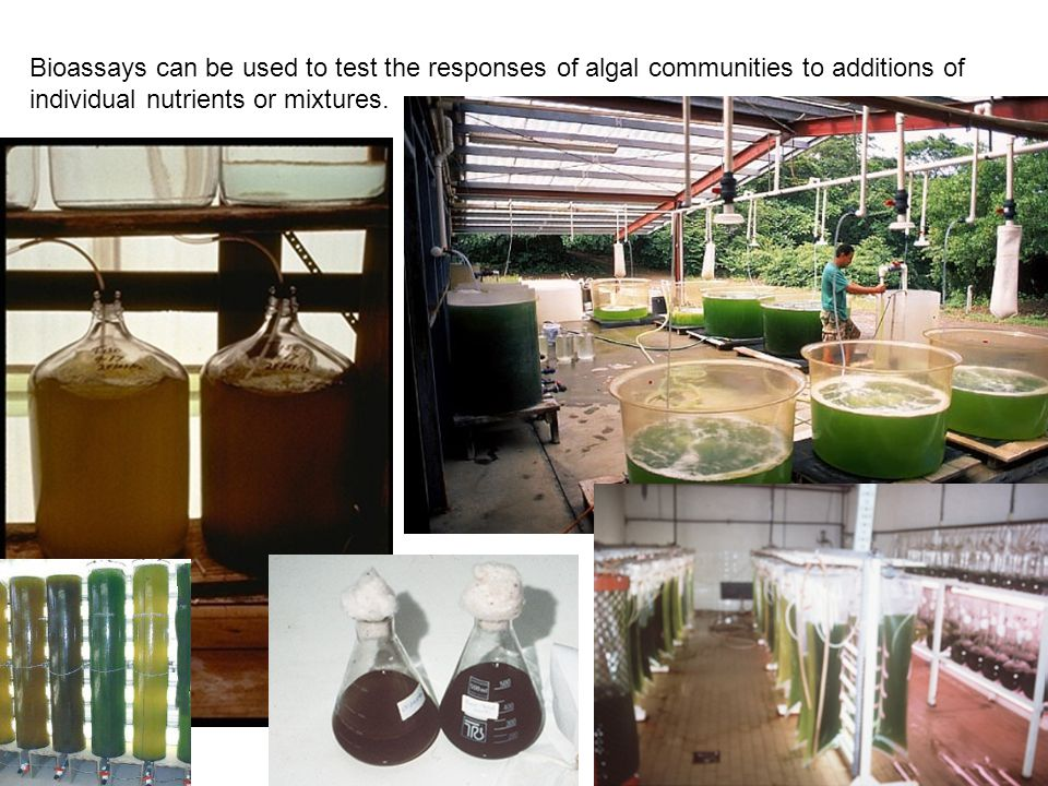 Bioassays can be used to test the responses of algal communities to additions of individual nutrients or mixtures.