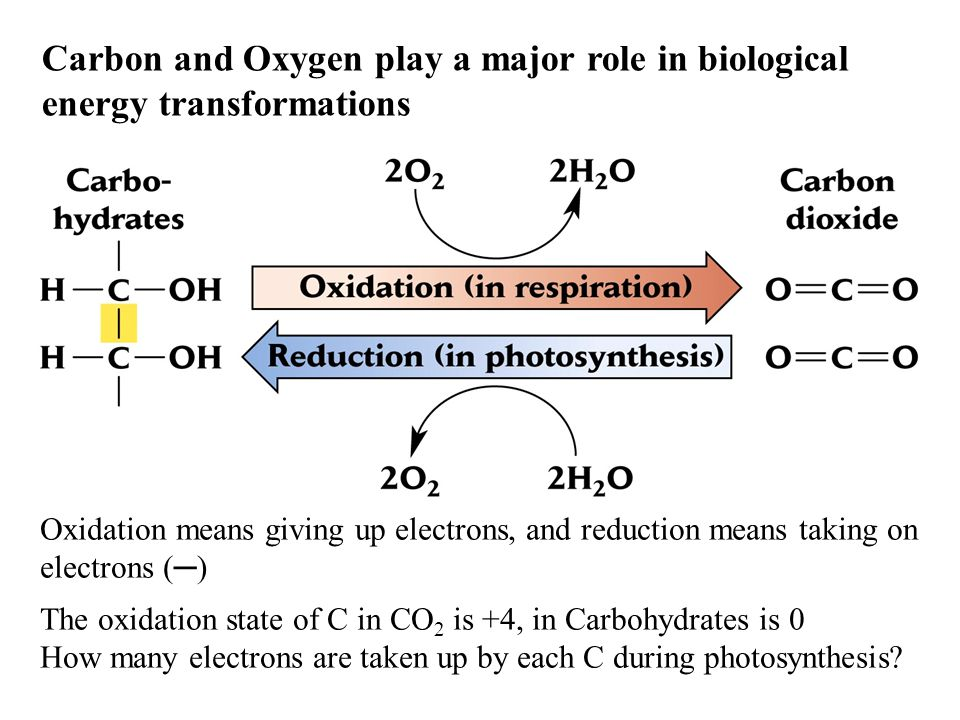 Carbon and Oxygen play a major role in biological energy transformations Oxidation means giving up electrons, and reduction means taking on electrons (─) The oxidation state of C in CO 2 is +4, in Carbohydrates is 0 How many electrons are taken up by each C during photosynthesis