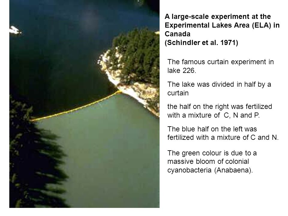 The famous curtain experiment in lake 226. The lake was divided in half by a curtain the half on the right was fertilized with a mixture of C, N and P
