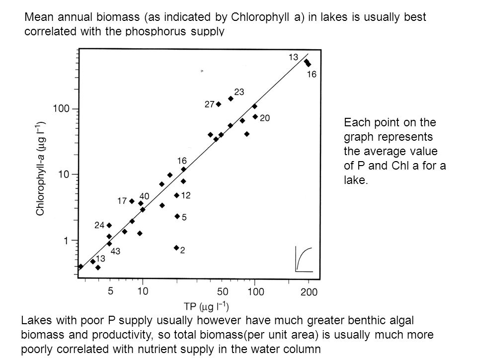 Mean annual biomass (as indicated by Chlorophyll a) in lakes is usually best correlated with the phosphorus supply Lakes with poor P supply usually however have much greater benthic algal biomass and productivity, so total biomass(per unit area) is usually much more poorly correlated with nutrient supply in the water column Each point on the graph represents the average value of P and Chl a for a lake.