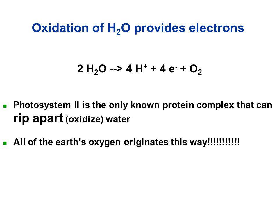 PQ H+H+ 2e – H+H+ NAD  NADPH