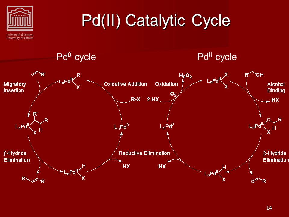 14 Pd(II) Catalytic Cycle Pd 0 cycle Pd II cycle