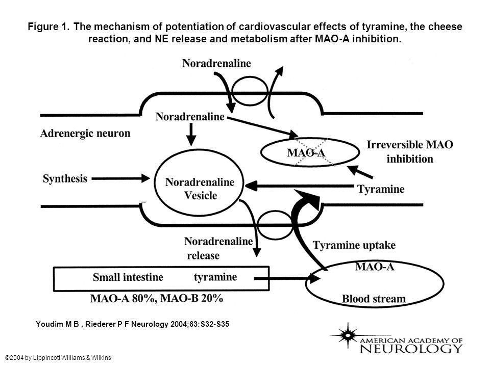 Figure 1. The mechanism of potentiation of cardiovascular effects of tyramine, the cheese reaction, and NE release and metabolism after MAO-A inhibiti