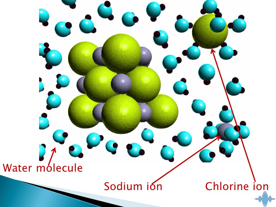 Sodium ion Water molecule Chlorine ion