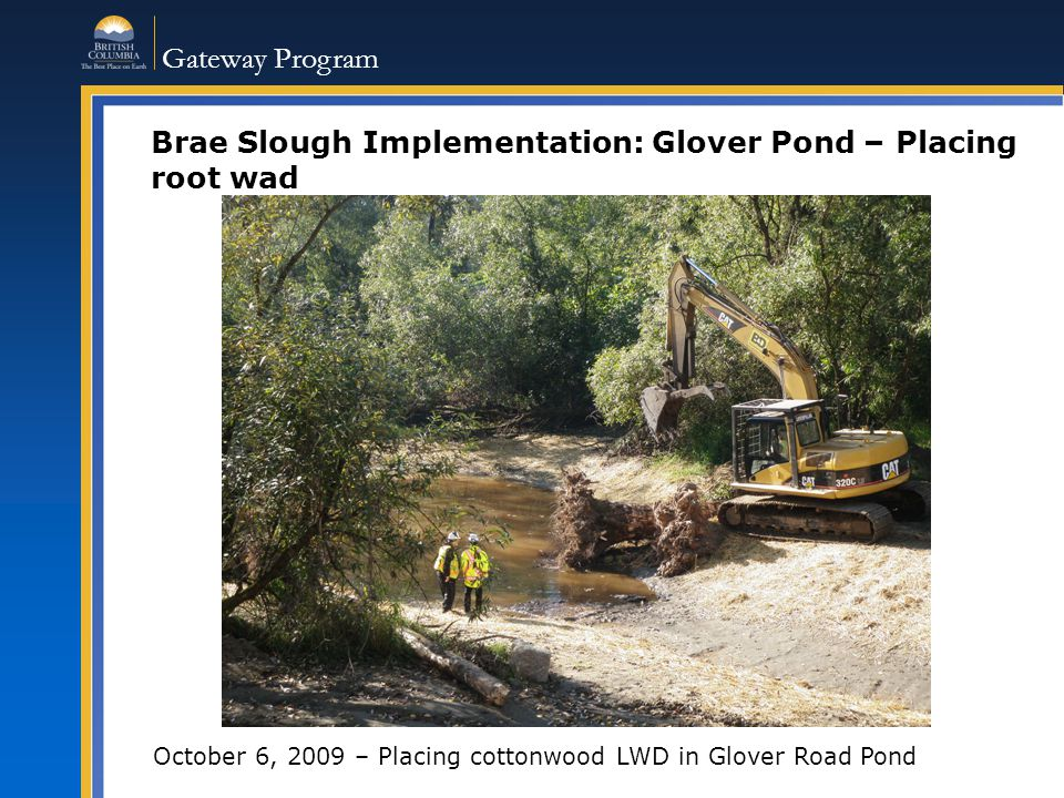 Gateway Program Brae Slough Implementation: Glover Pond – Placing root wad October 6, 2009 – Placing cottonwood LWD in Glover Road Pond