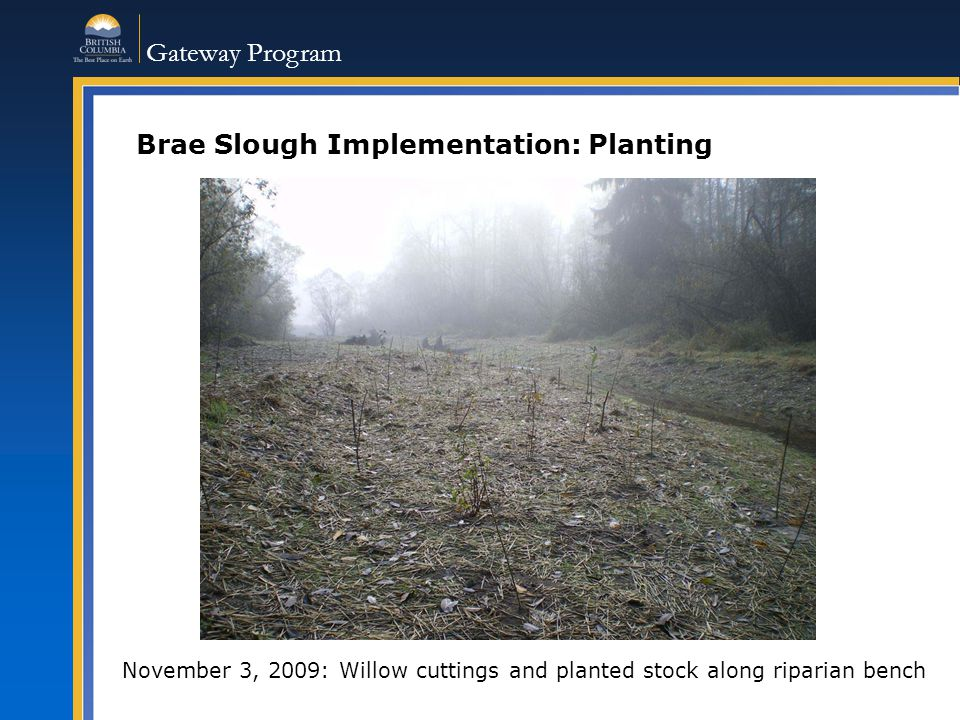Gateway Program Brae Slough Implementation: Planting November 3, 2009: Willow cuttings and planted stock along riparian bench