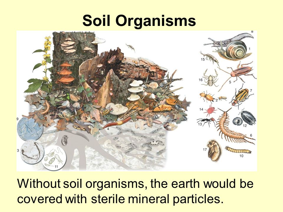 Soil Organisms Without soil organisms, the earth would be covered with sterile mineral particles.