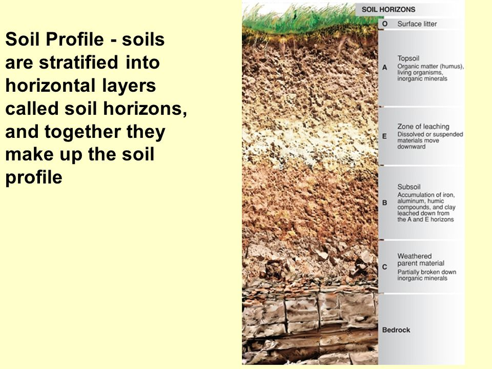 Soil Profile - soils are stratified into horizontal layers called soil horizons, and together they make up the soil profile