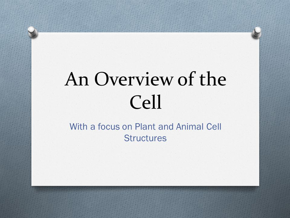 An Overview of the Cell With a focus on Plant and Animal Cell Structures