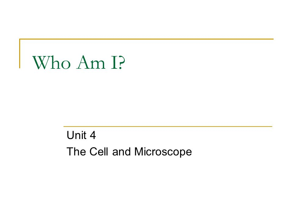 Who Am I? Number 3 on the diagram below.