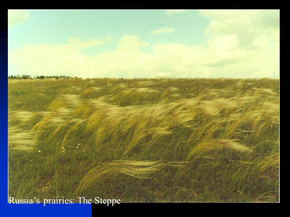 Russia's prairies: The Steppe