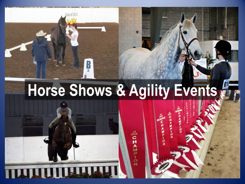 Horse Shows & Agility Events