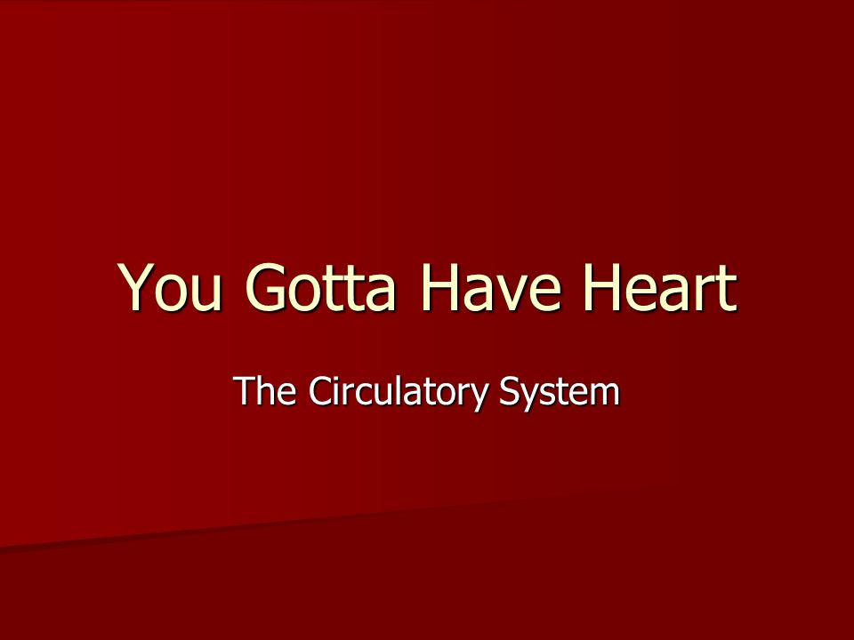You Gotta Have Heart The Circulatory System
