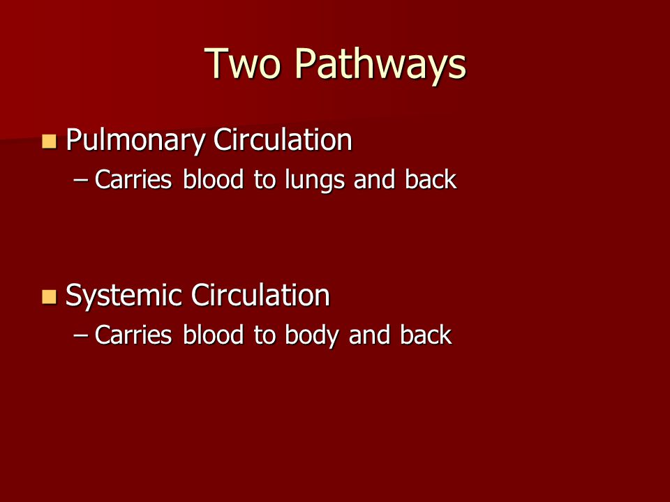 Circulatory System BLOOD VESSELS